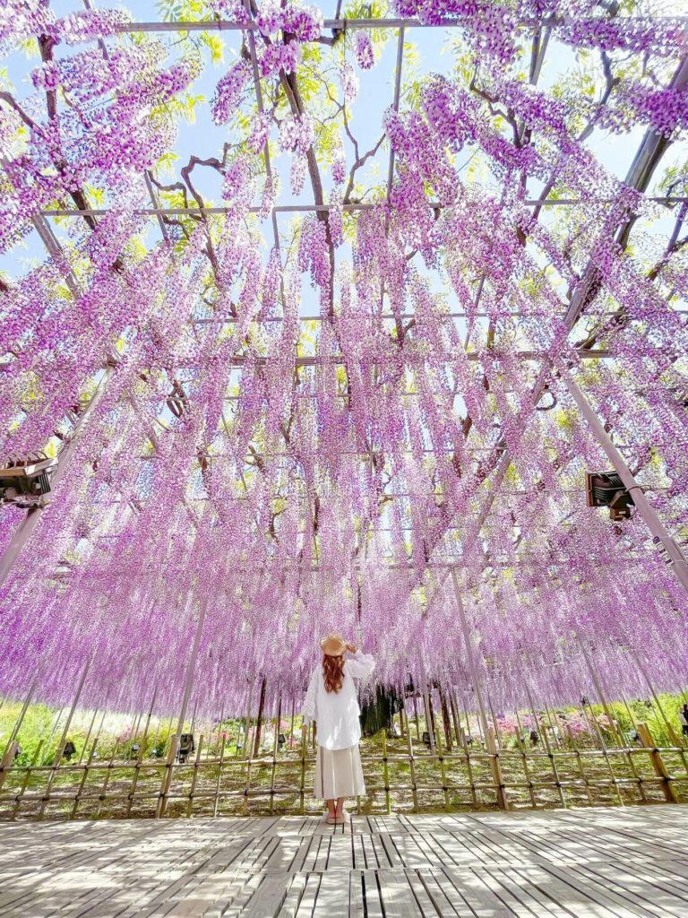 Flower Garden Photography 01