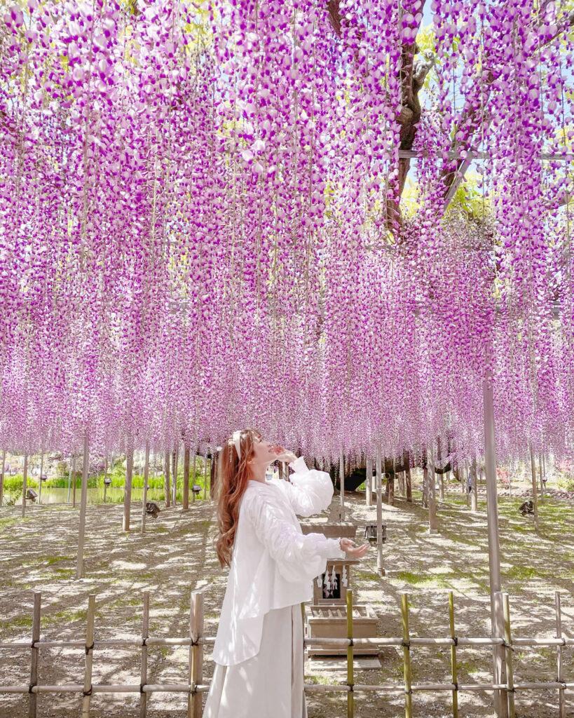 Flower Garden Photography 02