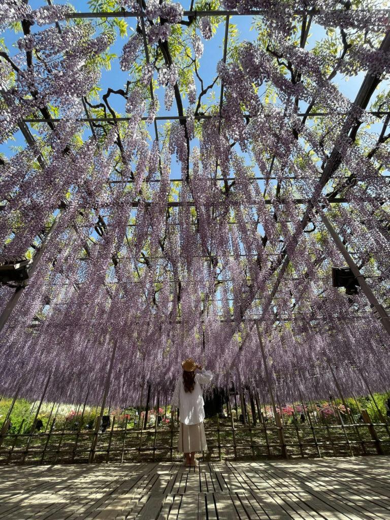 Flower Garden Photography 03